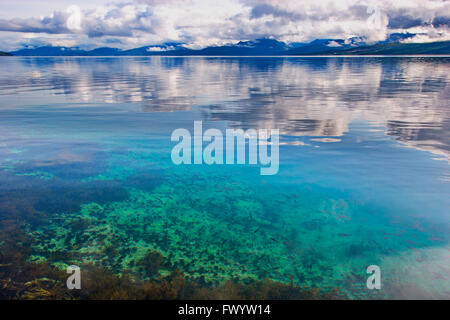 Young fish are swimming in the clear water of Ofotfjorden near Evenes in  northern Norway. - Stock Image