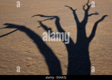 Shadow of dead trees in dry clay pan, Dead Vlei, Soussusvlei, Namibia, Africa - Stock Image