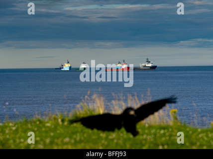 photograph of crow landing by the sea - Stock Image