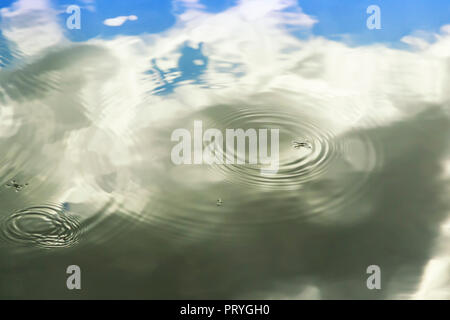 Water strider on water surface - Stock Image