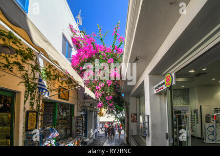 A colorful, narrow street with souvenir shops and pink bloomed bougainvillea flowers overhead, in the tourist center of Santorini Greece. - Stock Image