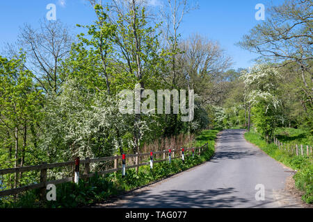 The joys of a warm Spring day in Eskdale, North York Moors, Yorkshire, UK - Stock Image