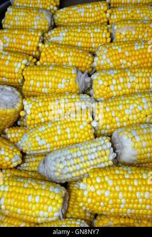 Steamed peaches & cream corn on the cob halves - Stock Image