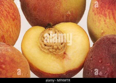 Fresh peaches. White background. Studio shot.         Ref: CRB538_103609_0029  COMPULSORY CREDIT: Martin Harvey / Photoshot - Stock Image