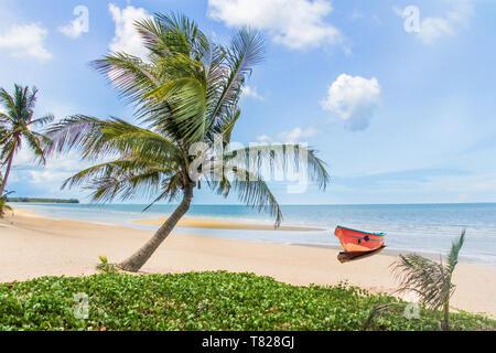 Palm tree on tropical beach, Prachuap Khiri Khan, Thailand - Stock Image