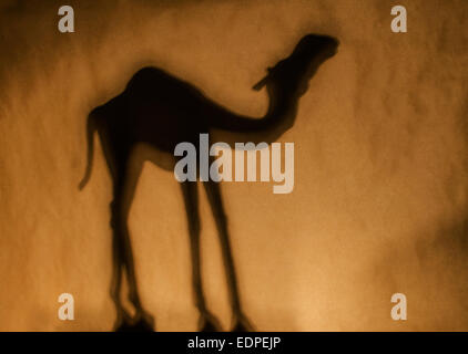 silhouette of camel dromedary against brown - Stock Image