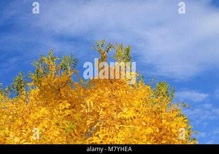 Sunny Autumn Days and Blue Skies in Ireland - Stock Image