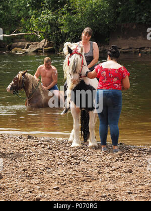 travellers swimming their horses after washing them in the River Eden, Appleby-in Westmorland at the annual Appleby Horsefair, Cumbria, England UK, 8 June, 2018. washing horses in River Eden Credit: Steve Holroyd/Alamy Live News - Stock Image