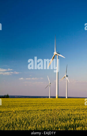 Windmills in a field of rye with blue sunny sky - Stock Image