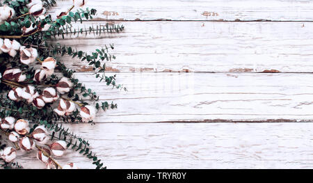 Cotton flowers and eucalyptus branches over a  white wooden texture backdrop. Image shot from overhead view with room for text.. - Stock Image