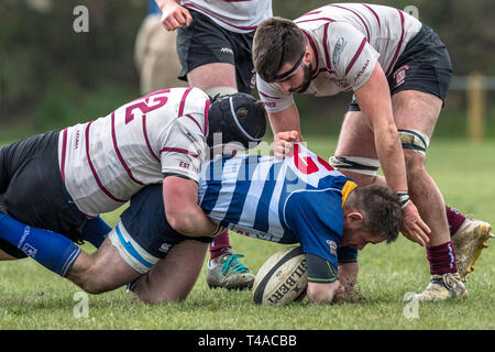 English amateur rugby union palyers in a tackle. - Stock Image