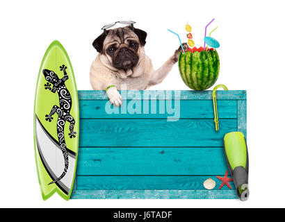 pug dog with blue vintage wooden beach sign, surfboard and summer watermelon cocktail, isolated on white background - Stock Image