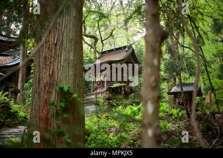 Side view of Massha Kumano Shinto shrine framed by trees. Aomori prefecture, North Honshu, Japan. - Stock Image