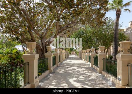 A beautiful tree lined avenue in Valletta, Malta - Stock Image
