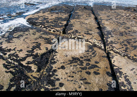 Wave-cut rock shelf at Adventure Bay, Bruny Island, Tasmania, Australia - Stock Image