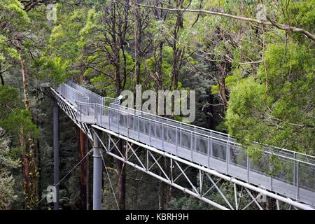 Tree top walkway through the canopy at Otway Fly, in the Otway rain forest, Victoria, Australia. - Stock Image