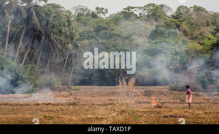 An Indian female farmer performing stubble burning in a field on a hot summer day. - Stock Image