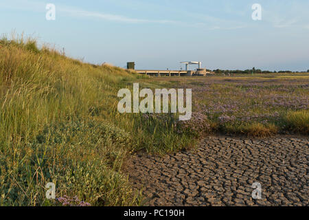 Sea Lavender on dry, parched marsh flats at Breydon Water with the Breydon Bridge in the distance, Great Yarmouth, Norfolk, UK. - Stock Image