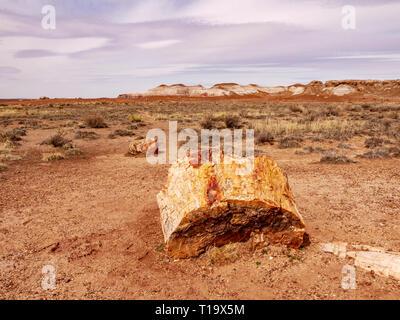 Petrified log and Painted Desert. Petrified Forest National Park, Arizona. - Stock Image