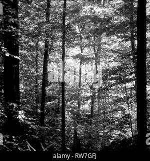 Sunlight Through Trees - Stock Image