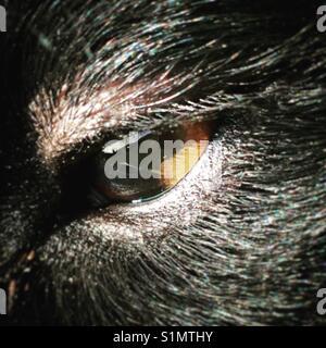 Dog eye close up - Stock Image