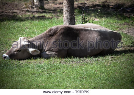 Even animals have a right to life - Stock Image