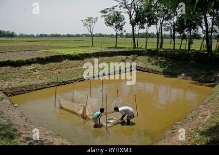 BANGLADESH Father & son working to restock their pond with fish, Garo tribal minority Haluaghat, Mymensingh region photo by Sean Sprague - Stock Image