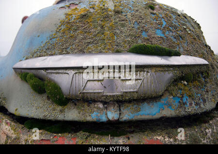An old Chevy truck has been sitting so long that moss has grown on the logo on the front grill. - Stock Image