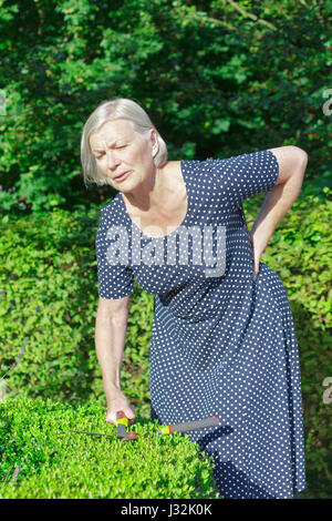 Senior woman in her garden yard cutting a boxwood hedge, holding her back because of a sudden intense backache or - Stock Image
