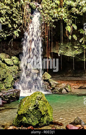 The Emerald Pool Dominica West Indies - Stock Image