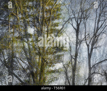 PHOTOGRAPHIC ART: Magical Forest - Stock Image