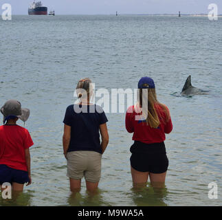 Three tourists watch a dolphin arriving at the waters edge at the Dolphin Discovery Centre, Koombana Drive, Bunbury, South Western Australia - Stock Image