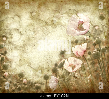 Grungy background with poppies - Stock Image