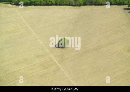 Aerial view of a single tree in a middle of a harvested field - Stock Image