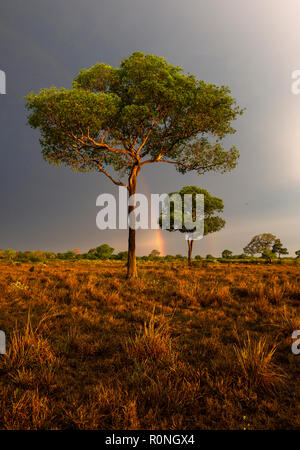 North Pantanal landscape after the passage of a summer storm - Stock Image