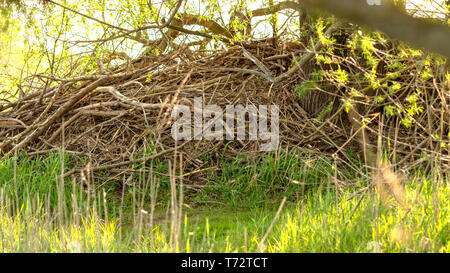 Beaver Castle - National Park on the Elbe in Germany - Stock Image