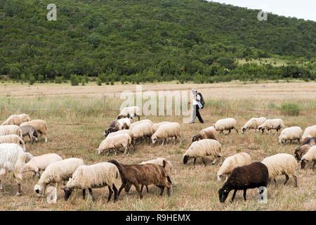 Flock sheep  & goats near Vjosa river bridge Albania - Stock Image