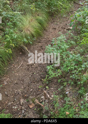 Dry drainage ditch beside field, taken during 2018 heatwave. - Stock Image