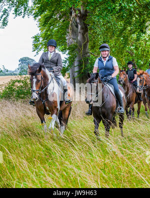 Two ladies out riding horses and leading a group down a green lane on a summers day - Stock Image