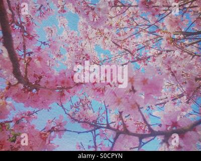 Pretty, pink sakura or cherry blossoms with blue sky and vintage painterly texture overlay. - Stock Image
