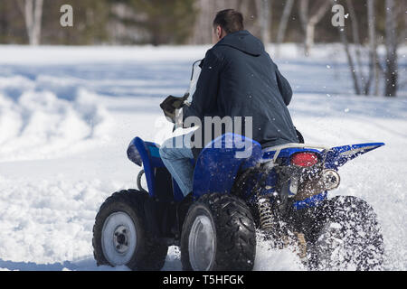 A winter forest in daylight. An adult man riding a big blue snowmobile. Back view - Stock Image