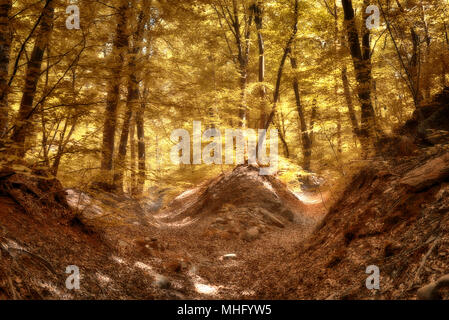 Autumn colors in the woods with rays of Sun through the trees and foliage in foreground, fairytale landscape - Stock Image