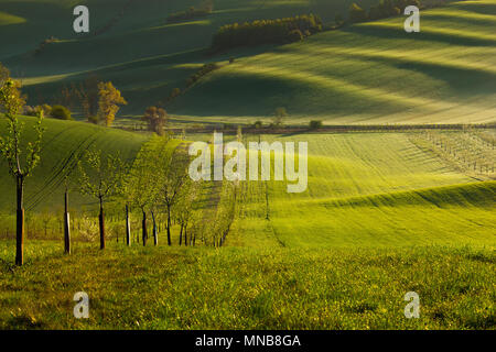 sunset lines and waves with trees in the spring - Stock Image