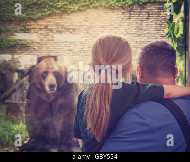 A father and child are looking into a glass at a zoo at a captive brown bear for a conservation, extinction or animal - Stock Image