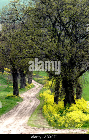 yellow Spring wildflowers edge a path in le Marche ,the Marches,Italy - Stock Image