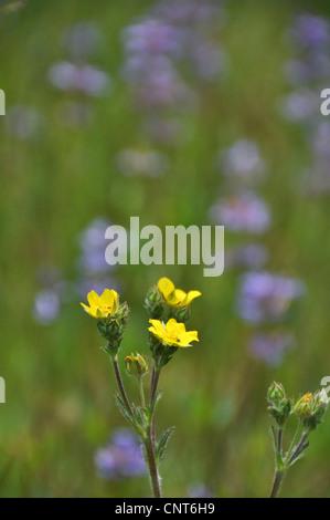 Spring season wildflowers meadow nature vertical yellow flower beautiful - Stock Image
