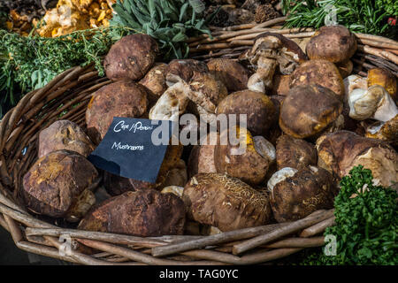 Porcini/Ceps fresh organic mushrooms on interior display in rustic basket at speciality high quality delicatessen in Borough Market Southwark London UK - Stock Image