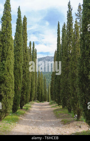 Walking path at Kesariani aesthetic forest on mountain Hymettus (Ymittos) - Stock Image