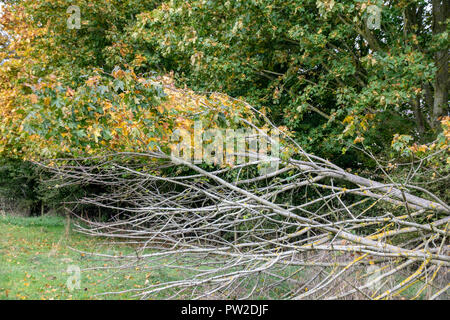 Autumnal colors on a fallen tree - Stock Image