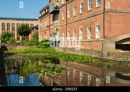 Pond water lilies, housing development, Navigation Walk, Leeds, England - Stock Image